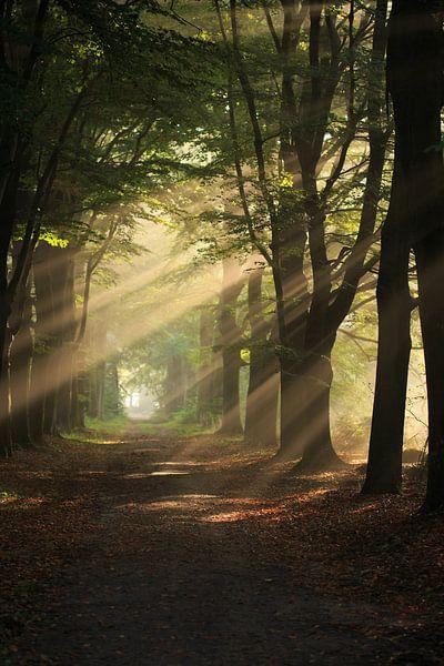zonneharpen van hanny bosveld