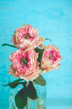 Roze rozen in glazen vaas tegen blauwe achtergrond van Natascha Teubl
