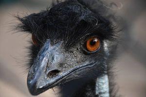 Emu van dichtbij van Maurits Kuiper