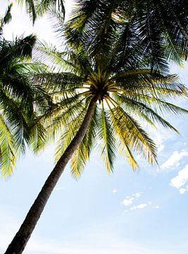Sfeervolle foto van een palmboom van Bianca ter Riet