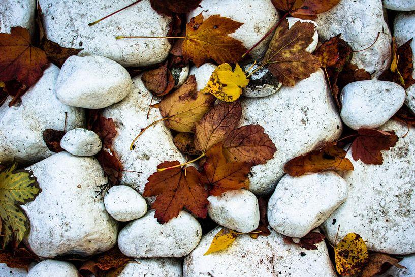 Rocks and Leaves van Ruud van Ravenswaaij