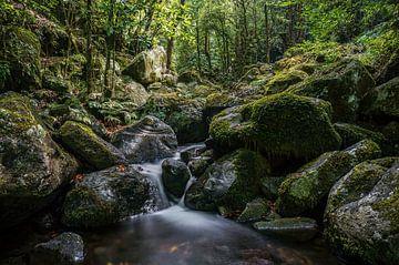 Een riviertje omringt door het groene woud (Madeira) van Joris Pannemans - Loris Photography