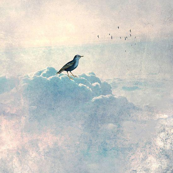HEAVENLY BIRD Ia van Pia Schneider