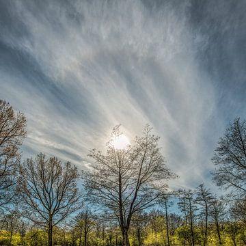 Bäume in der Region Lauwersmeer in der Frühlingssonne und einem Heiligenschein von Harrie Muis