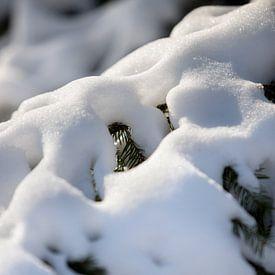 Makrofoto von Schnee auf einem Ast in ländlicher Umgebung | Fine Art Photo Print | Poster von Karijn | Fine art Natuur en Reis Fotografie