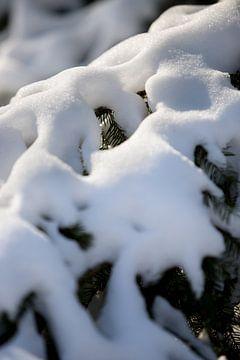 macrofoto van sneeuw op een tak in een landelijke natuur omgeving   fine art foto print   poster van Karijn   Fine art Natuur en Reis Fotografie