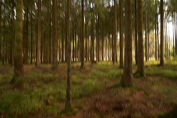 Schilderachtig bos van Angélique Vanhauwaert