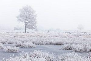 Wit winterland met boom in moeras