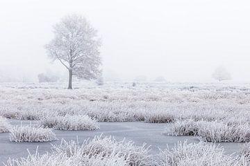 Wit winterland met boom in moeras van