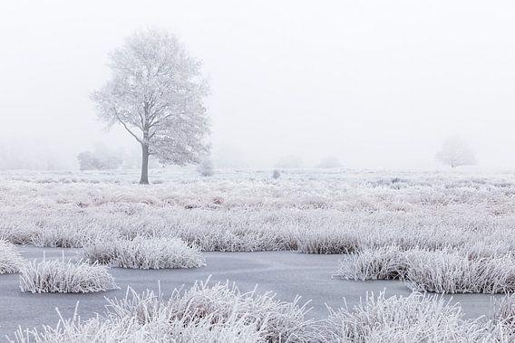 Wit winterland met boom in moeras van Karla Leeftink