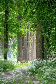 Laan met bomen van Miranda Snoeijen