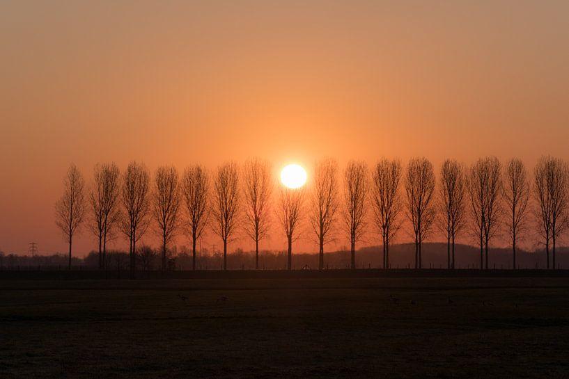 Baumreihe von Moetwil en van Dijk - Fotografie