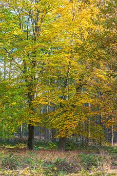 herfst10 van Geertjan Plooijer