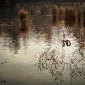 De swamplands van Purmerend van Jan van der Knaap