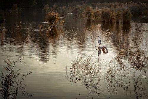 De swamplands van Purmerend