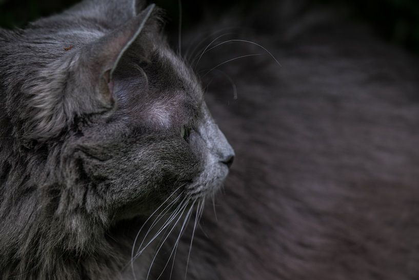 Kopf einer Katze mit Blick zur Seite von Henk Vrieselaar