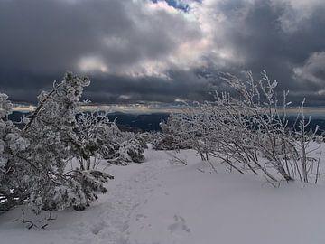 Winterlandschap met besneeuwd wandelpad in Zwarte Woud van Timon Schneider