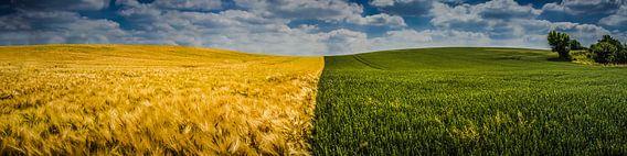 Graan en Koren in het Heuvelland van by Feelingz