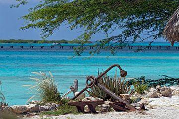 caraibische zee van gea strucks