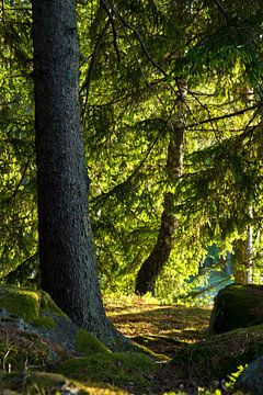 Zonnig bos in Zweden van Anja B. Schäfer