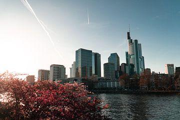 Frankfurt Cityscape mit Kirschblüten von Mert Sezer
