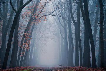 Oh deer! von Martin Podt