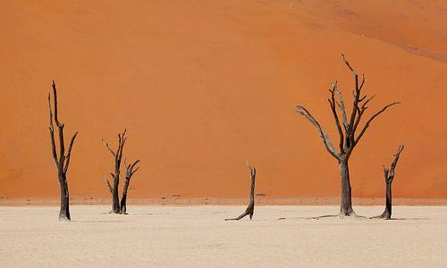 Woestijn Namibië van