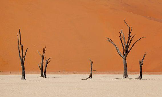 Woestijn Namibië