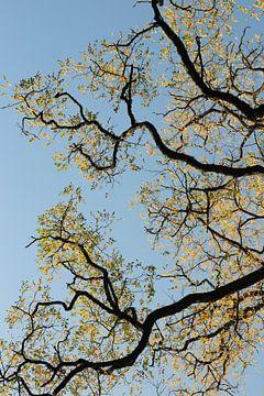 Balance in Gold. Ootmarsum, Twente in het najaar. van Henk Poelarends