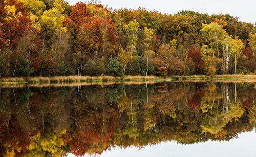 Herfst in het Leersumse Veld
