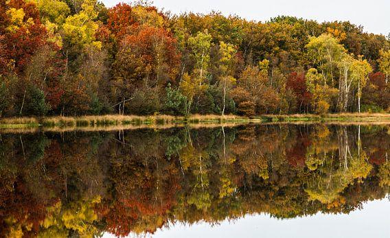 Herfst in het Leersumse Veld van Dirk Jan Kralt