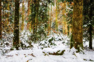 Bos in winterslaap van Nicc Koch