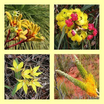 Collage Westaustralischer Wildblumen in Gelb von Ines Porada