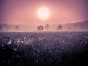 Webjes in de ochtend