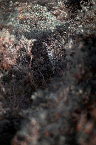 Bambi het bekende rendier is verstopt tussen de struiken