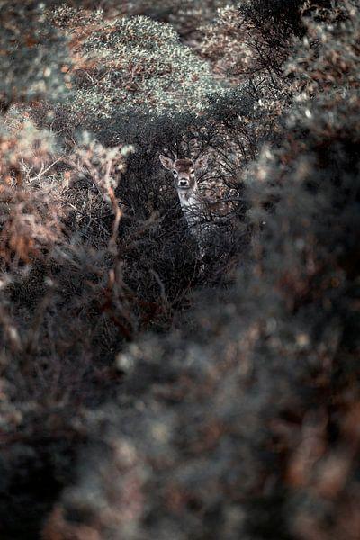 Bambi het bekende rendier is verstopt tussen de struiken van Steven Dijkshoorn