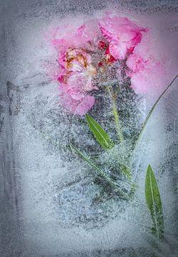 Oleander in Wasser gefroren. von Wilfried-Reinhard Köhn