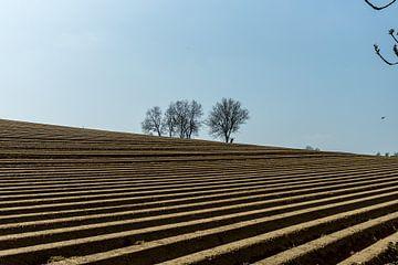 Limburg von Mooie Foto