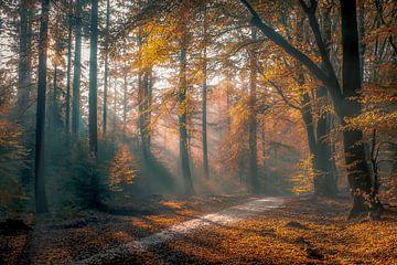 Herfst in het bos van Niels Barto