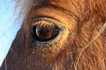 Das weiche Auge von Kirsten L.