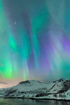 Nordlicht, Polarlicht oder Aurora Borealis am Nachthimmel über den Lofoten von Sjoerd van der Wal