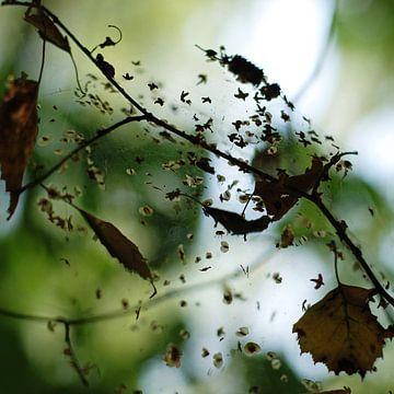 Gevangen bladeren, een sfeerbeeld uit de natuur van