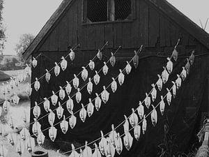Vissers werf met haring