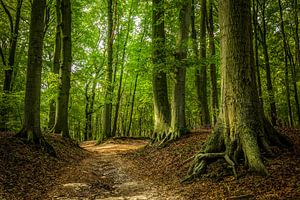 A summersday walk in the woods van