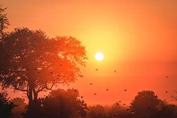 Afrikaanse zonsondergang van Wilke Tiellemans