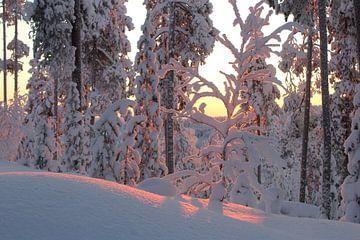 Sneeuw  Winterwonder Landschap van Jolande Monique Honig