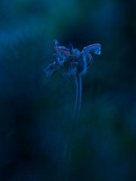 Bloem Wildemanskruid blauw van bird bee flower and tree