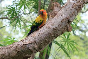 Parrot in tree von Menno van der Werf