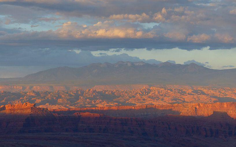 Canyonlands National Park zonsondergang van bird bee flower and tree