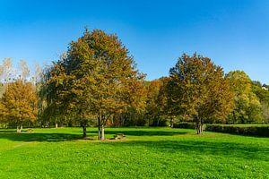 Bäume in einem Park auf einem Feld in Nordfrankreich